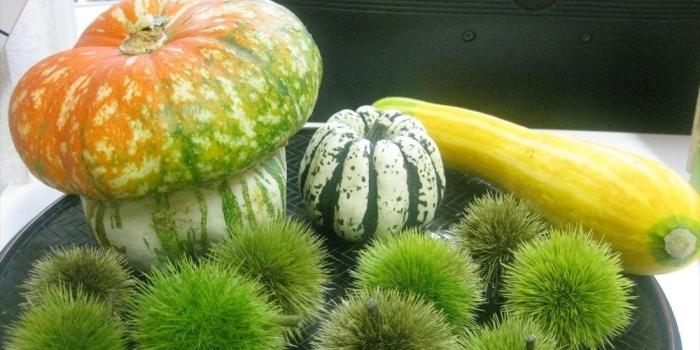 ご家族様、ケアマネージャーの皆様へ【ヘンテコな野菜達】